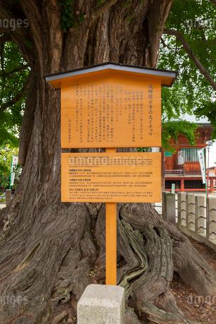 高山 飛騨国分の大イチョウの写真素材 [FYI01716713]
