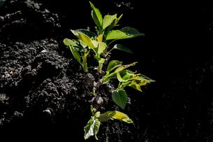 Close-up of Plantsの写真素材 [FYI01716880]