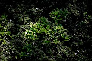 Close-up of Plantsの写真素材 [FYI01716905]