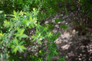 Close-up of Plantsの写真素材 [FYI01716914]