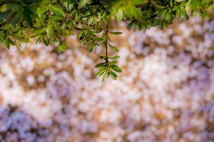 Close-up of Plantsの写真素材 [FYI01716919]
