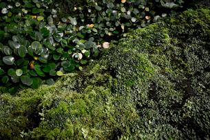 Close-up of Plantsの写真素材 [FYI01716923]