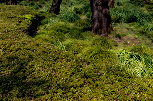 Close-up of Plantsの写真素材 [FYI01716929]