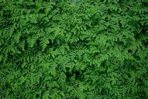 Close-up of Plantsの写真素材 [FYI01716932]