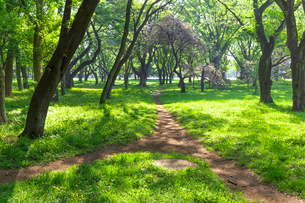木漏れ日の林の中の道の写真素材 [FYI01716970]