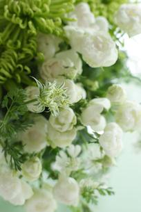 スプレーバラと菊の写真素材 [FYI01717148]