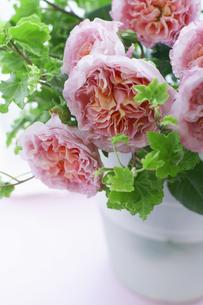 バラとアイビーの写真素材 [FYI01717193]