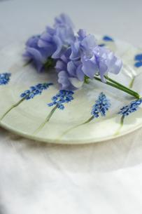お皿にのせたスイトピーの写真素材 [FYI01717200]