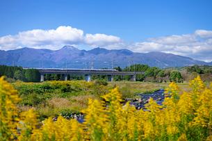 東北新幹線と那須岳と余笹川に咲くセイタカアワダチソウの写真素材 [FYI01717775]