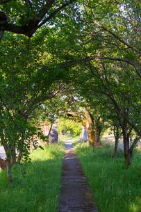 刀尾神社、木々に包まれた参道の写真素材 [FYI01717781]