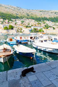 ドブロブニク、旧港と黒猫の写真素材 [FYI01717992]