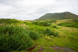 西表島,金山につながる草原地帯の写真素材 [FYI01718069]