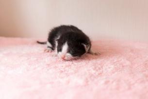 小さすぎる仔猫の写真素材 [FYI01718082]