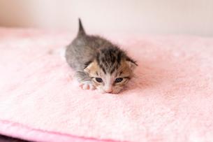 小さすぎる仔猫の写真素材 [FYI01718350]