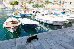 ドブロブニク、旧港と黒猫の写真素材 [FYI01718385]