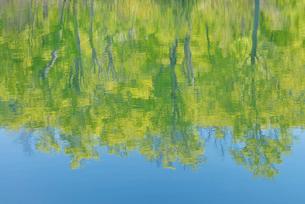 水辺に映る新緑の写真素材 [FYI01718856]