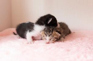 小さすぎる仔猫の写真素材 [FYI01718863]