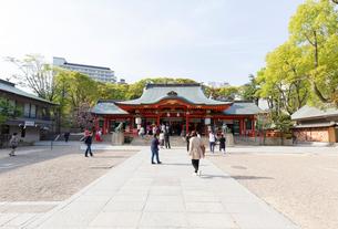 生田神社 社殿の写真素材 [FYI01718995]