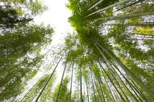 奈良公園の竹藪の写真素材 [FYI01719000]