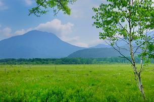 新緑の戦場ガ原とワタスゲの花の写真素材 [FYI01719273]