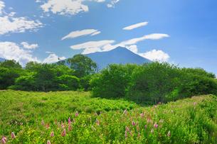 戦場ガ原のホザキシモツケの花と男体山の写真素材 [FYI01719379]