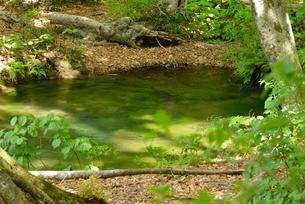 獅子ヶ鼻湿原 湧水池 出つぼの写真素材 [FYI01719389]