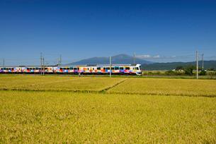 JR羽越本線快速きらきらうえつと鳥海山と稲穂の写真素材 [FYI01719401]