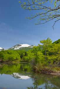 五色沼の新緑と残雪の月山の写真素材 [FYI01719441]