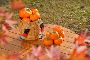 次郎柿とモミジの写真素材 [FYI01719503]
