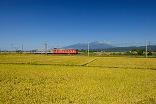 JR羽越本線と鳥海山と稲穂の写真素材 [FYI01719557]