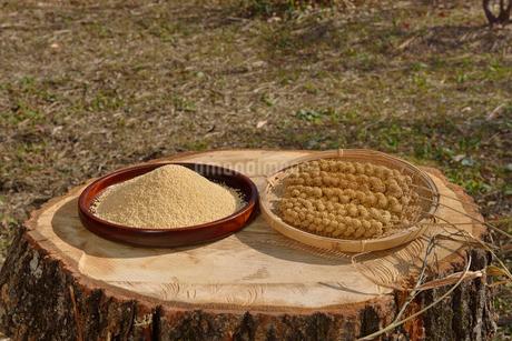 粟の殻をむいた実と穂の写真素材 [FYI01719573]