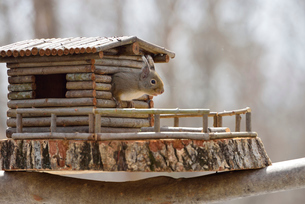 冬のニホンリスとログハウスの小屋の写真素材 [FYI01719695]