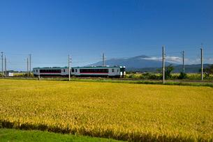 JR羽越本線と鳥海山と稲穂の写真素材 [FYI01719703]