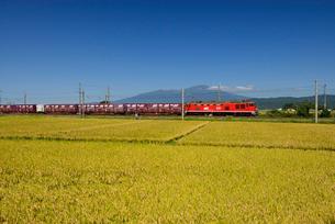 JR羽越本線貨物列車と鳥海山と稲穂の写真素材 [FYI01719731]