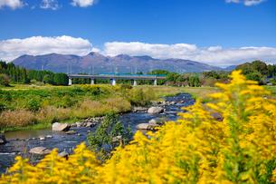 東北新幹線と那須岳と余笹川に咲くセイタカアワダチソウの写真素材 [FYI01719779]