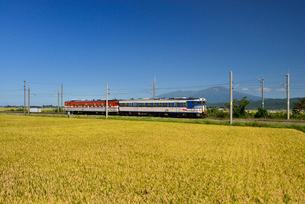 JR羽越本線と鳥海山と稲穂の写真素材 [FYI01719791]