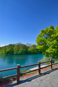 新緑の五色沼(毘沙門沼)と磐梯山の写真素材 [FYI01719826]