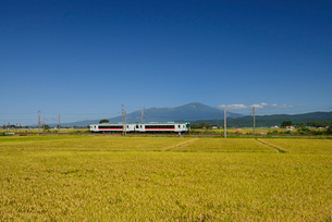 JR羽越本線と鳥海山と稲穂の写真素材 [FYI01719834]