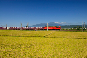 JR羽越本線貨物列車と鳥海山と稲穂の写真素材 [FYI01719837]