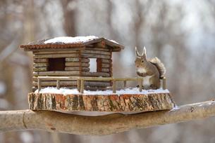 冬のニホンリスとログハウスの小屋の写真素材 [FYI01719849]