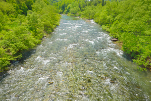 新緑と寒河江川の写真素材 [FYI01719870]
