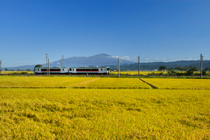 JR羽越本線と鳥海山と稲穂の写真素材 [FYI01719901]