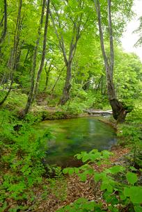 獅子ヶ鼻湿原 湧水池 出つぼの写真素材 [FYI01719904]