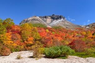 茶臼岳と姥ヶ平の紅葉の写真素材 [FYI01719911]