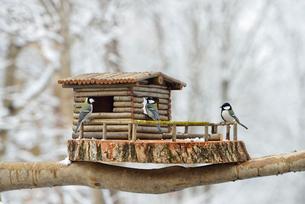 シジュウカラとログハウスの小屋の写真素材 [FYI01719924]