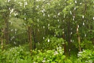 雨と森の写真素材 [FYI01720002]