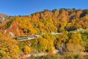 田子倉湖付近の紅葉と国道252号の写真素材 [FYI01720083]