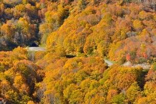 田子倉湖付近の紅葉と国道252号の写真素材 [FYI01720091]