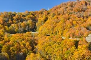 田子倉湖付近の紅葉と国道252号の写真素材 [FYI01720118]