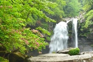 二ノ滝とタニウツギの花の写真素材 [FYI01720125]